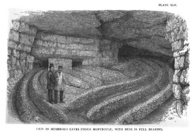 Pilzhöhlen