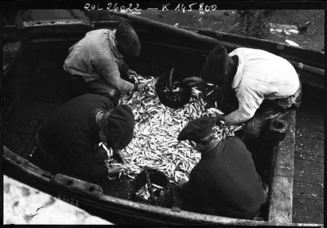 Gallica-Sardine-fishermen