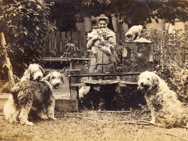 Photograph with dogs