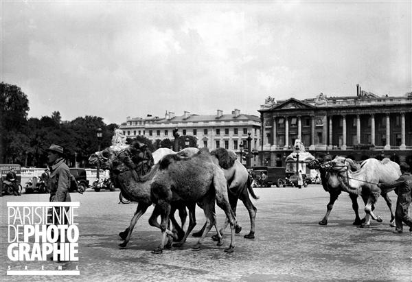 CamelsPlacedelaConcorde